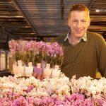 Phalaenopsisteler trekt uitgebloeide planten opnieuw in bloei