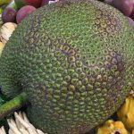 Exotische vruchten uit Nederlandse kassen