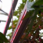 'Klimaatambities van glastuinbouw staan door ODE onder druk'