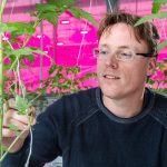 Onderzoeker Gerben Messelink hoogleraar bij Entomologie