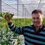 Verkassen naar Friesland brengt tomatenteler eindeloze groei