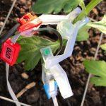 Met sensoren stengeldiameter en bladdikte meten