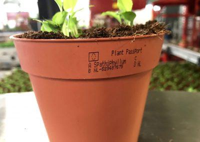 Verplicht plantenpaspoort printen?