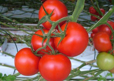 Teeltstrategie optimaliseren met oogstprognosemodel