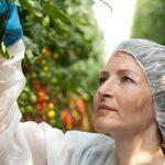 Plantenvirussen: de zwakste planten gaan het eerst