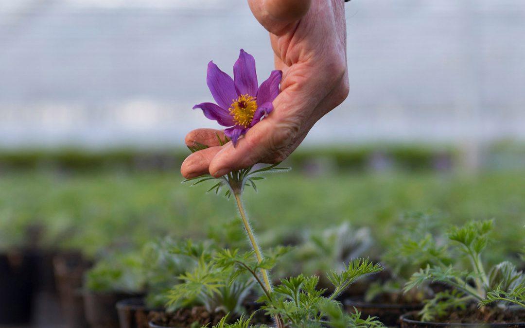 'Binnen tuinbouw is veel behoefte aan mentale ondersteuning'
