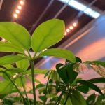 Een klimaatneutrale potplantenteelt is een uitdaging
