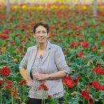 De oplossing voor vergroening: Greenhouses