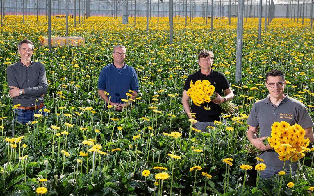 Collectieven sierteeltafzet: meer uit de markt halen met collega's