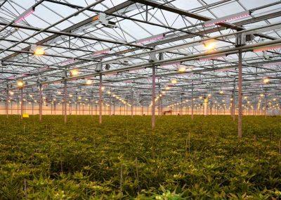 Marco de Groot: 'Diffuus glas levert jaarrond positieve bijdrage'