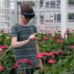 AR-bril vertelt of gerbera geoogst kan worden