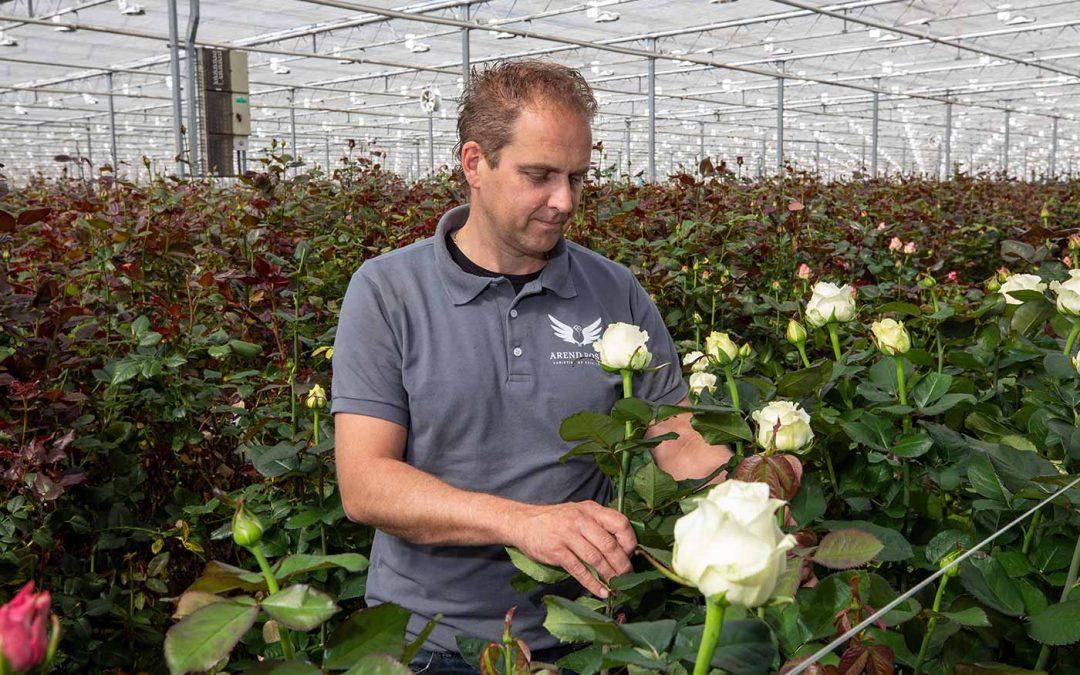 Arend Roses gaat voor duurzame meeldauwbestrijding