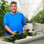 'Draadloze sensoren tillen komkommerteelt naar hoger plan'