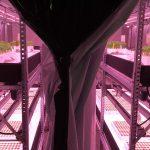Daglichtloos telen: hoe flexibel kan een plant zijn?