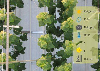 Simmer meten en beter telen met gewasbeheersingsmodellen