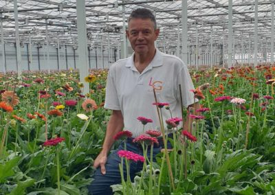 'Een meer gelijkmatig klimaat en een betere bloemkwaliteit'