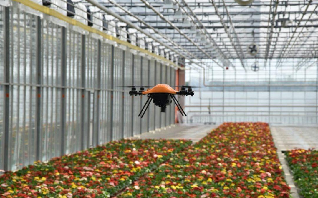 Globe Plant telt als eerste bedrijf zelf kiemplanten met een drone