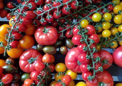Nieuw EU-project moet kwaliteit van tomatenrassen vergroten
