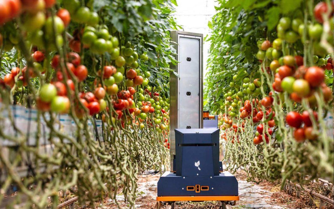 Robot maakt prognose van aantal tomaten, grootte en rijpheid