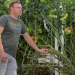 Belgische teler kiest voor extra lichte kas met diffuus glas