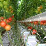 Subsidie SDE++ nog niet ideaal voor glastuinbouw
