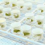 Planten telen met natuurlijke afweerstoffen tegen voedselbederf