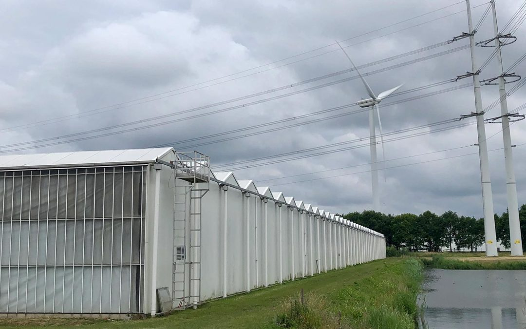 'Wij willen het eerste energieneutrale glastuinbouwgebied zijn'