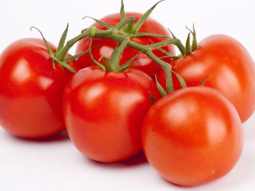 Modelleren vruchtkwaliteit op basis van groeicondities