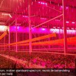 Onderzoek naar juiste spectrum en lichtverdeling bij full-LED belichting