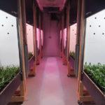 Meer licht geeft fors meer groei bij bromelia