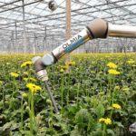 Prototype oogstrobot kan gerberastelen oogsten
