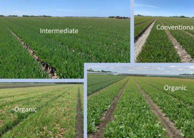 Onderzoek naar bodemeigenschappen op effect gezondheid