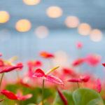 'Zoek in het vroege voorjaar naar de juiste balans in klimaat'