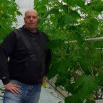 Remi van Geest gaat wittevlieg te lijf met sinaasappelolie-middel