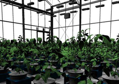3D-modellering van planten nu inzetbaar voor innovaties