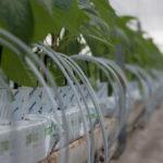 Italiaans onderzoek: jodium wellicht essentieel sporenelement