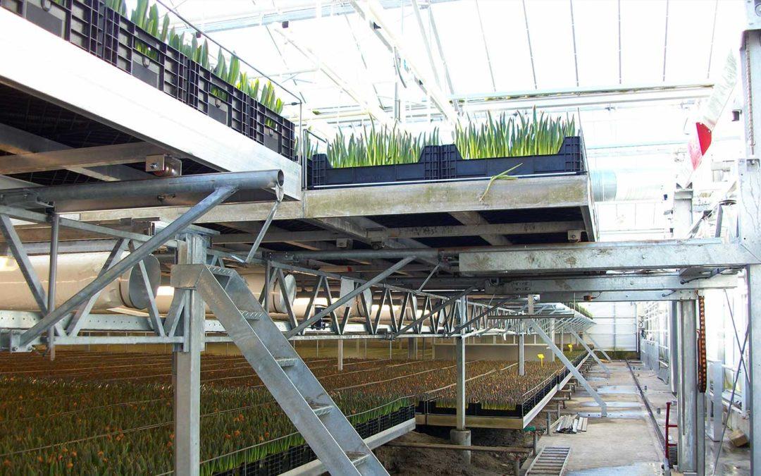 Energieverbruik in de broeierij van tulpen sterk gedaald