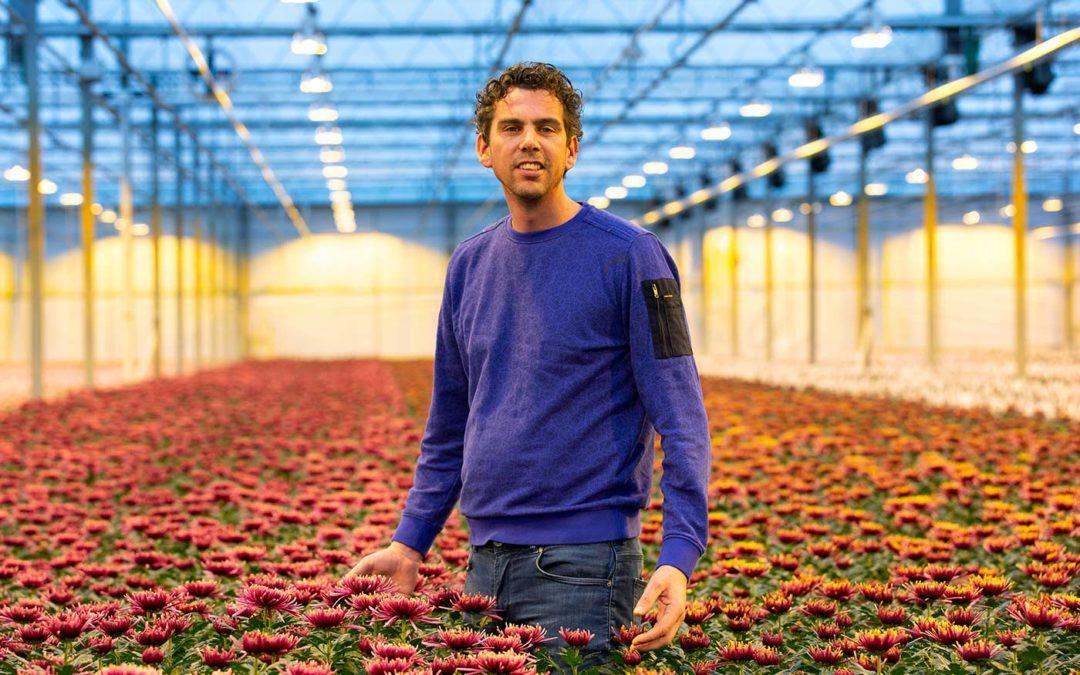 Dennis Immerzeel: 'Proef chrysant onder tripsgaas succesvol'