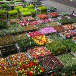 Brexit begint voor meeste tuinbouwproducten op 1 april pas echt