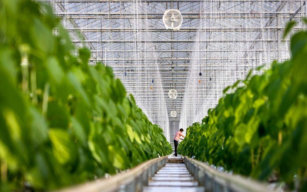 Nieuw: De nieuwe generatie Multifan Tuinbouwventilatoren