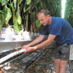 Bijbelichten in paprika: 'Hybride systeem kansrijker dan LED'