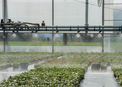 Vochtregulator laat substraat en plant beter presteren