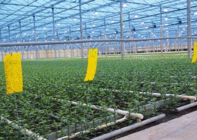 IPM Tool weerbaar telen en geïntegreerde gewasbescherming
