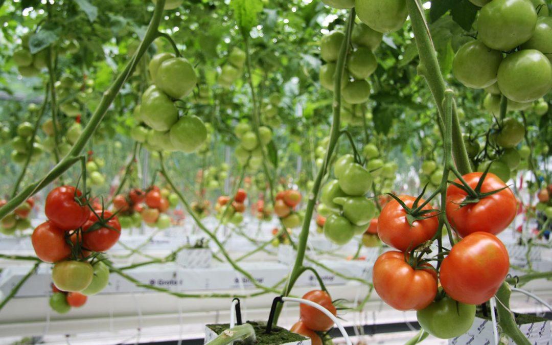 Vruchten groeien 's nachts en dat weten we al lang