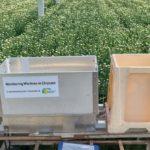 Schade wantsen beperken door gebruik lichtval in chrysant