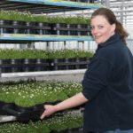 Al vanaf begin goede prijsvorming in nieuw perkplantenseizoen