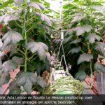 Spintroofmijten doen het ook goed bij een lage luchtvochtigheid