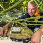 'Overmatige wortelgroei overwonnen met weerbaar gewas'