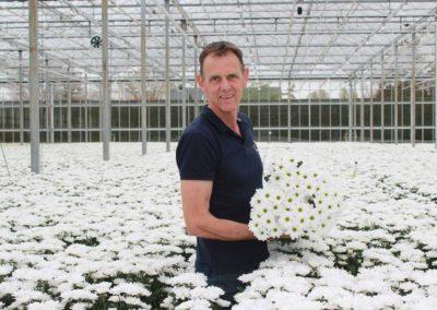 'Troschrysant met perfect, witte bloemen en groener bloemhart'
