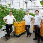 Komkommer groeit prima onder breedspectrum full LED